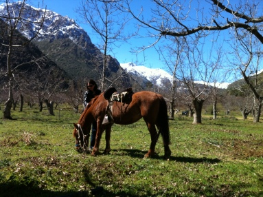 Katherine Quevedo with horse in the Andes