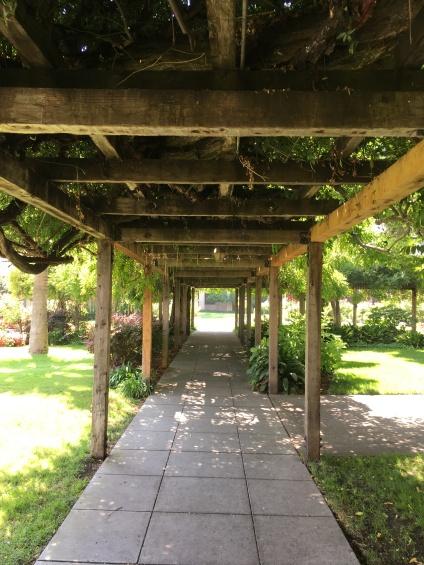 Santa Clara University - wisteria walkway
